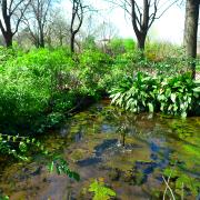 giardino-degli-aromi-milano-erbe-aromatiche