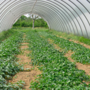 verdure-biologiche-chilometro-zero-milano