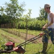 azienda-agricola-cassani-dove-comprare-verdura-filiera-diretta-milano