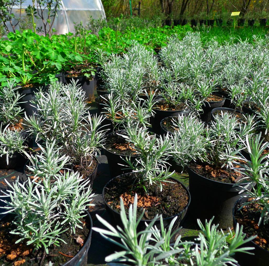 Giardino degli aromi paolo pini - Piante per il giardino ...