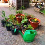 community-garden-isola-milano-pepe