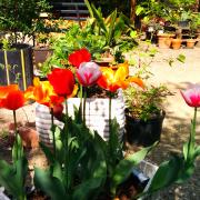 dove-trovare-community-garden-milano