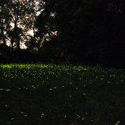 parchi-con-lucciole-milano