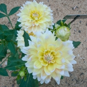fiori-orto-botanico-brera-milano