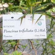 fiori-orto-botanico-brera-milano2