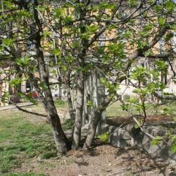 Verde per tutti ai Giardini di via Montello