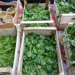 Il mercatino dei produttori a San Vittore