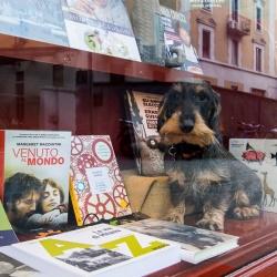 La libreria di quartiere di Sarpi
