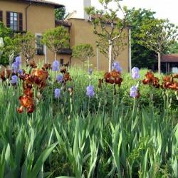 La sorpresa dell'orto botanico di Villa Lonati