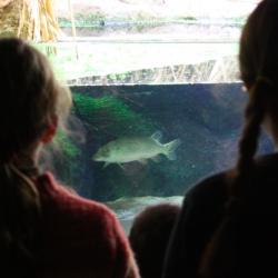 L'acquario dei pesci nostrani
