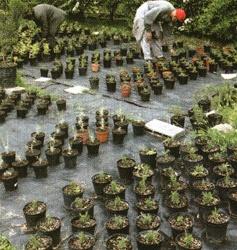 Le piante aromatiche del Giardino degli Aromi