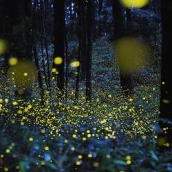 La magia delle lucciole (a Milano!)